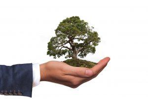 tendance écologique